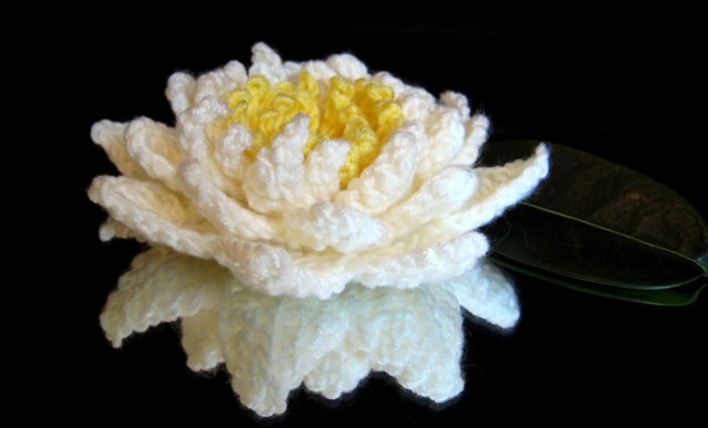Water Lily Make My Day Creative